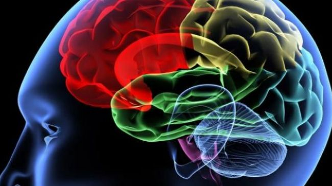Speaking two languages benefits the aging brain